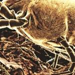 La moquette infestata da parassiti